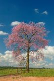 Tree with red flowers and clouds. A tree with red flowers and clouds stock photo