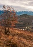 Gloomy late autumn scenery. Tree in red foliage on hillside. distant mountain with snowy top. village down in the valley. gloomy late autumn scenery royalty free stock photography