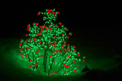 Tree with red and green lights Stock Image