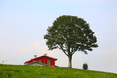 Tree and red house in a valley stock image
