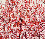 Tree with red leaf and branch on white paper Stock Photos
