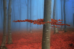 Tree with red leaves in blue fog during fall Stock Photography