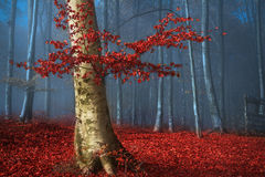 Tree with red leaves in blue foggy forest during autumn