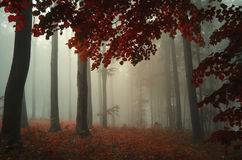 Tree with red leaves in enchanted magical forest with fog Stock Photo