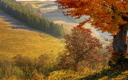 Tree with red leaves on hillside Stock Image