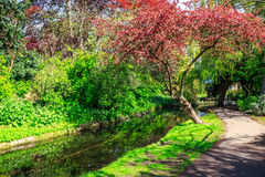 Tree with Red Leaves at New River Walk, London. A tree with red leaves and other foliage in sunlight around the canal at the New River Walk, Canonbury, London royalty free stock photo