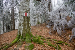 Tree with red marker in wonderful white forest Stock Image