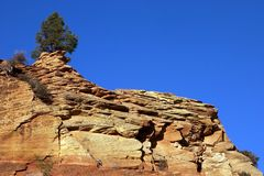 Tree on red rock cliffs. Single tree on the red rock cliffs at Zion National Park Royalty Free Stock Photo