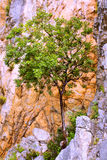 Tree in red stone. Crimea hiking. Royalty Free Stock Images