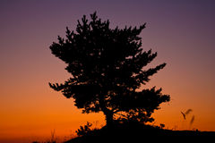 Tree on red sunset Royalty Free Stock Image