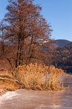 Tree and Reeds in a Frozen Lake - Italy Royalty Free Stock Photography
