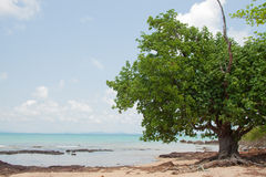 Tree and reef at seaside of island in thailand Stock Photos