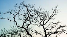 Tree refection Stock Photos