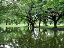 The tree reflect background Royalty Free Stock Photo