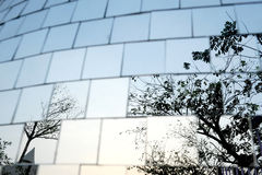 Tree reflect in chrome cubes wall. Photo no 3D stock illustration