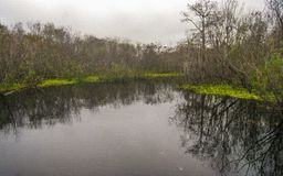 Tree Reflect on Surface of Lake Washington. Trees reflect and water lilies grow on the surface of the dark water of Lake Washington near Melbourne, Florida stock photo