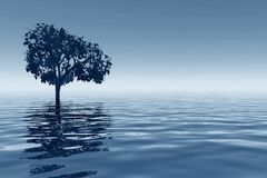 Tree reflected on sea Royalty Free Stock Photos