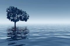 Tree reflected on sea royalty free stock photos