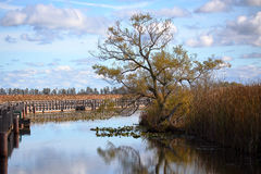 Tree reflected in water leading into a marsh on a cloudy day Royalty Free Stock Photos