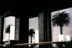 Tree Reflecting Image Through Glass Royalty Free Stock Image