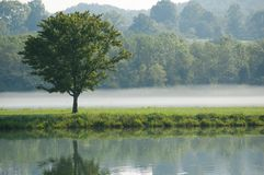 Tree reflecting in the lake on foggy morning Stock Photography