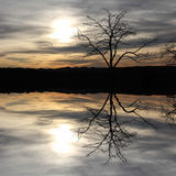 Tree reflecting in a lake, mystic scenery Royalty Free Stock Images