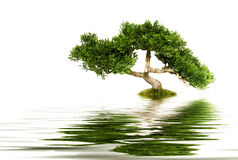 Tree reflecting in water Stock Photos