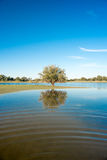 Tree reflecting in waters of small lake, Kalahari, South Africa Stock Images