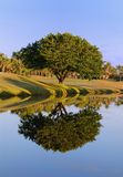 Tree Reflection Stock Image