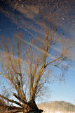 Tree reflection Royalty Free Stock Photography