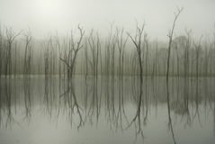 Tree Reflection Royalty Free Stock Images