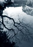 Tree reflection in ancient chinese garden Royalty Free Stock Photo