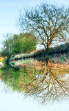 Tree Reflection on canal, inverted Stock Images