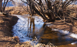 Tree Reflection in a Half Thawed Icy Creek Royalty Free Stock Images