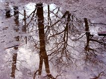 Free Tree Reflection In Puddle Stock Photography - 652602