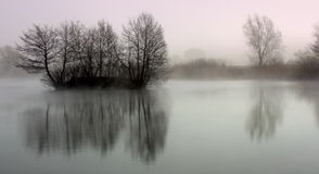 Tree reflection on lake. In the morning Royalty Free Stock Images