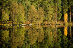 Tree reflection in the lake Stock Images