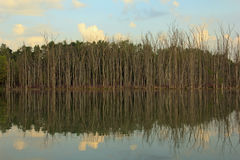 Tree reflection on a lake in Kent County Michigan Stock Photo