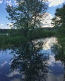Tree reflection in lake. Photo shows tree reflection in lake Stock Photo
