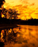 Tree reflection in lake at sunset Royalty Free Stock Photo