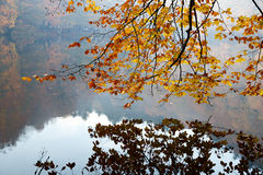 Tree with Reflection on Lake Stock Photography