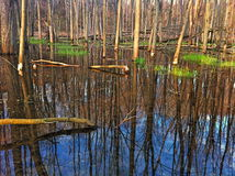 Tree reflection in pond Stock Photo