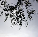 Tree Reflection in the Pound Stock Photography