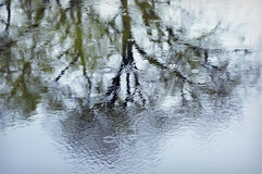 Tree Reflection in Rainy Pond Royalty Free Stock Photography