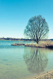 Tree with reflection in the water Royalty Free Stock Photography