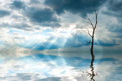 Tree reflection in water Stock Photo