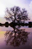 Tree with reflection Royalty Free Stock Photography