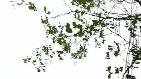 Tree reflection in water. Abstract water reflection as creative background. Tree reflection in blue water stock footage