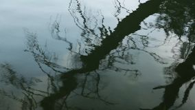 Tree reflection in water stock video