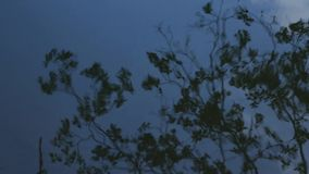 Tree reflection in water. Abstract water reflection as creative background. Tree reflection in blue water stock video